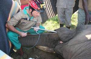 Animal Dentist (19 photos) 19