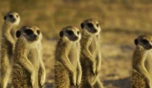Animals Without Necks (20 photos) 18