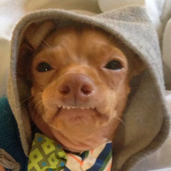 the_most_adorable_ugly_dog_ever_640_04