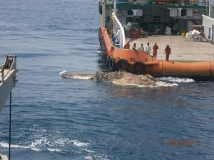 Strange Creature Found in the Persian Gulf (4 photos) 1