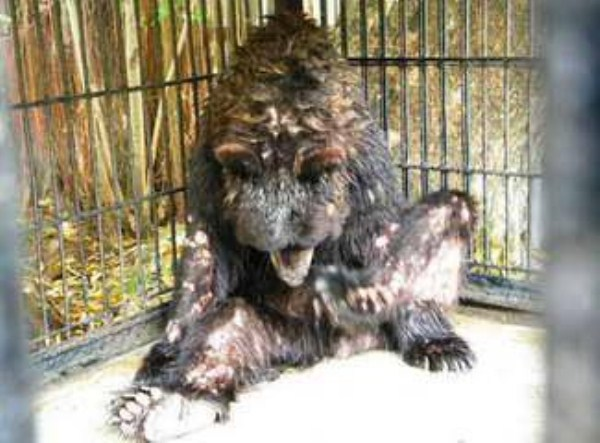 Nightmare Zoo in Indonesia (21 photos) 17