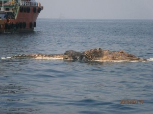Strange Creature Found in the Persian Gulf (4 photos) 2