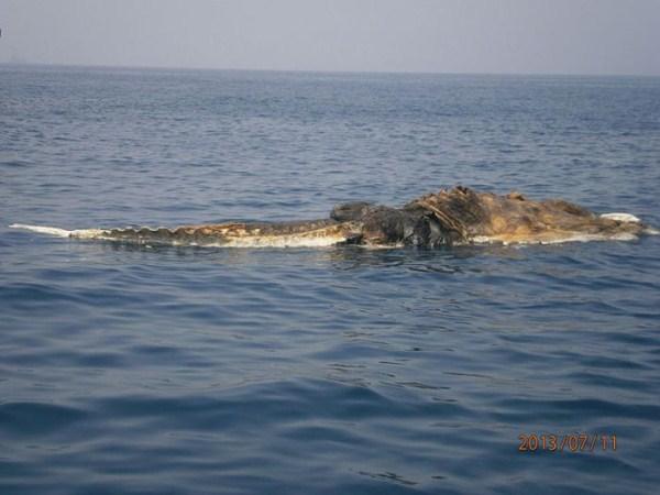 340 Strange Creature Found in the Persian Gulf (4 photos)