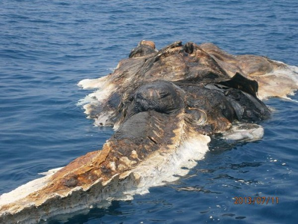 427 Strange Creature Found in the Persian Gulf (4 photos)
