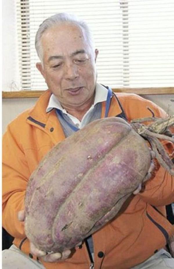 μεταλλάξεις των Μεταλλαγμένων Φουκουσίμα 10 της Φουκουσίμα (35 φωτογραφίες)