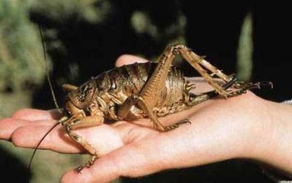14 Giant Creepy Crawlers (28 photos)