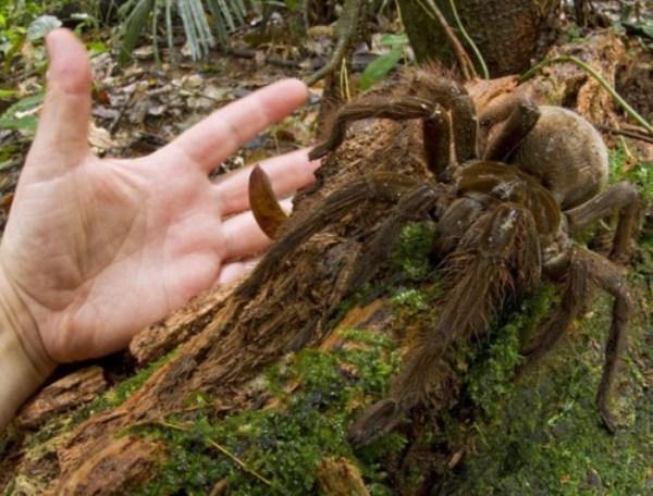 2 Giant Creepy Αράχνες (28 φωτογραφίες)