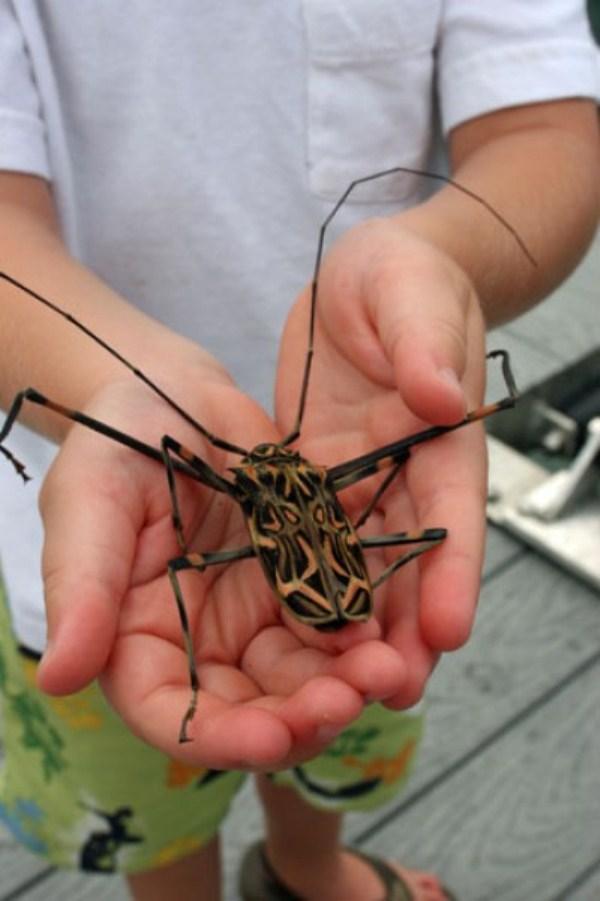 8 Giant Creepy Αράχνες (28 φωτογραφίες)
