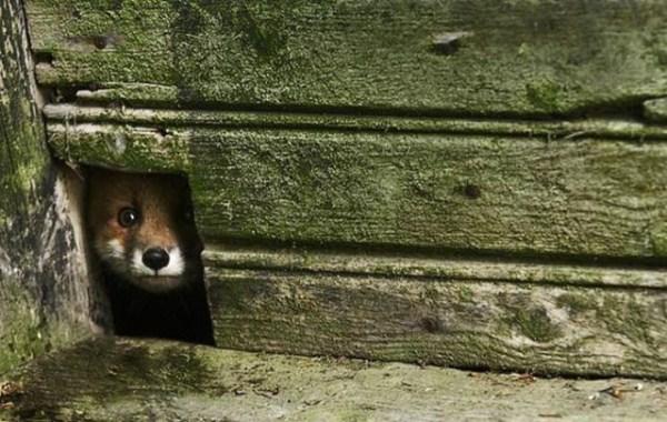 finish_woodland_houses_inhabited_by_animals_640_03