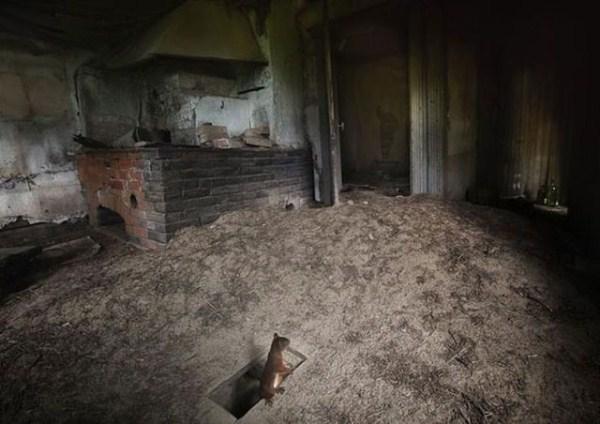 finish_woodland_houses_inhabited_by_animals_640_04