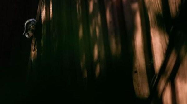 finish_woodland_houses_inhabited_by_animals_640_09