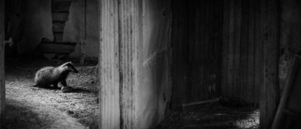 finish_woodland_houses_inhabited_by_animals_640_11
