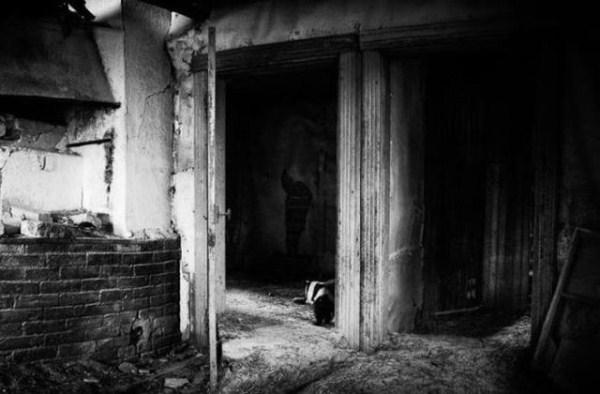 finish_woodland_houses_inhabited_by_animals_640_15