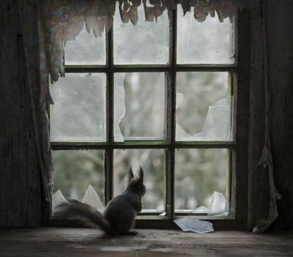 finish_woodland_houses_inhabited_by_animals_640_17