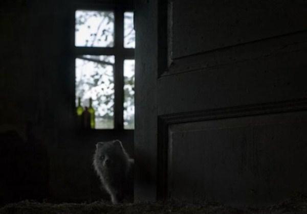 finish_woodland_houses_inhabited_by_animals_640_20