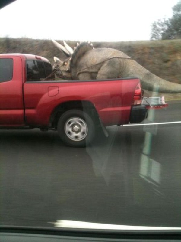 odd-things-on-the-road-18