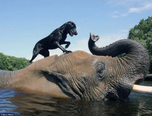 Remarkable Animal Friendship (9 photos) 1