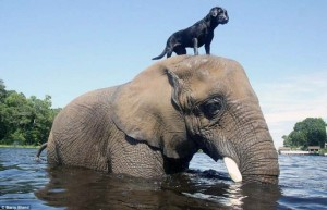 Remarkable Animal Friendship (9 photos) 3