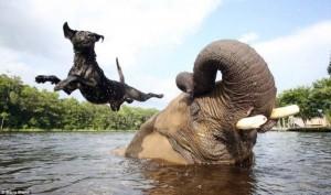 Remarkable Animal Friendship (9 photos) 5