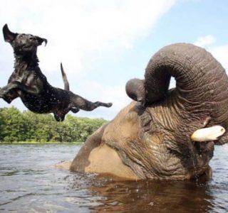 Remarkable Animal Friendship (9 photos)