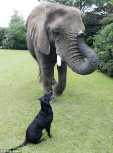 Remarkable Animal Friendship (9 photos) 8