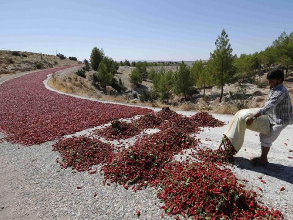 drying-hot-pepper-in-Turkey (2)