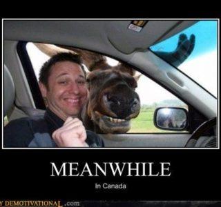 Meanwhile in Canada (46 photos)