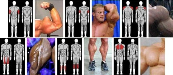 synthol_muscles (26)