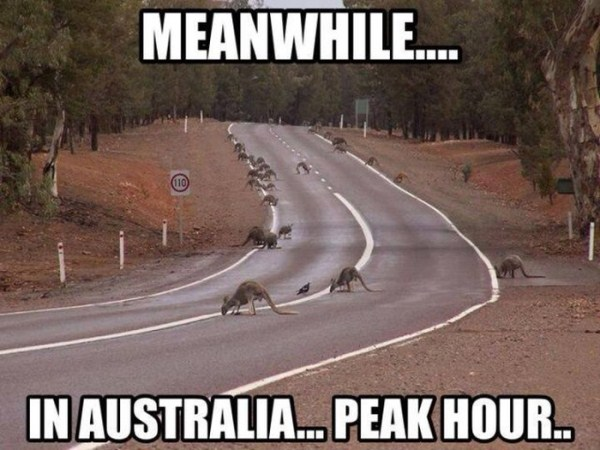 Meanwhile In Australia (1)