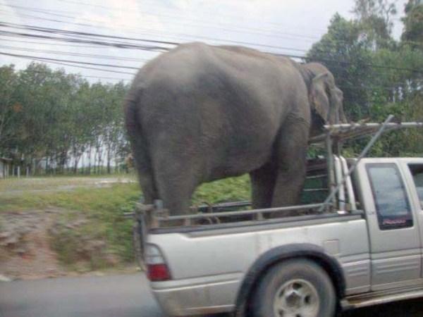 Odd Transportation (1)