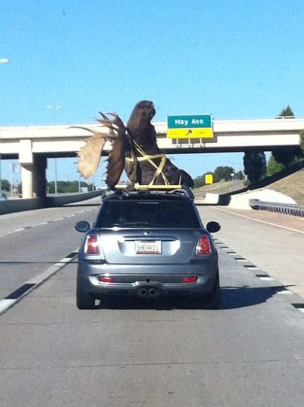 Odd Transportation (21)