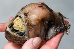 Creepy Deep Sea Creatures (48 photos) 21