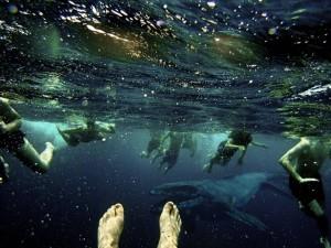 Creepy Deep Sea Creatures (48 photos) 25