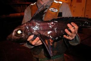 Creepy Deep Sea Creatures (48 photos) 35
