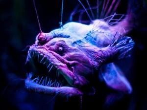 Creepy Deep Sea Creatures (48 photos) 36