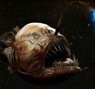 Creepy Deep Sea Creatures (48 photos)