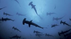 Creepy Deep Sea Creatures (48 photos) 4