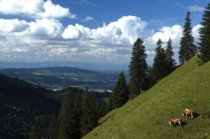 Swiss Cheese Making (22 photos) 1