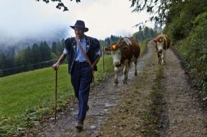 Swiss Cheese Making (22 photos) 6
