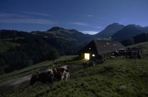 Swiss Cheese Making (22 photos) 7