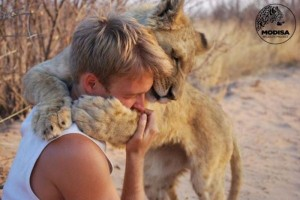 Living with Lions (37 photos) 5