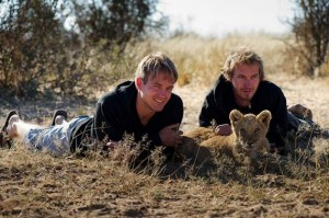 Living with Lions (37 photos) 18