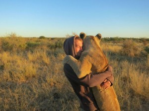 Living with Lions (37 photos) 23
