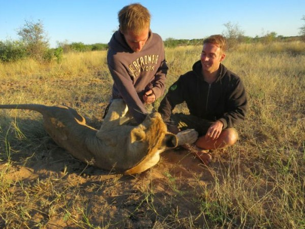 the_man_who_lived_with_lions_in_africa_26_1