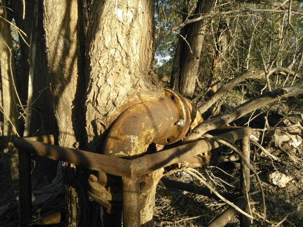 things eaten by trees (17)