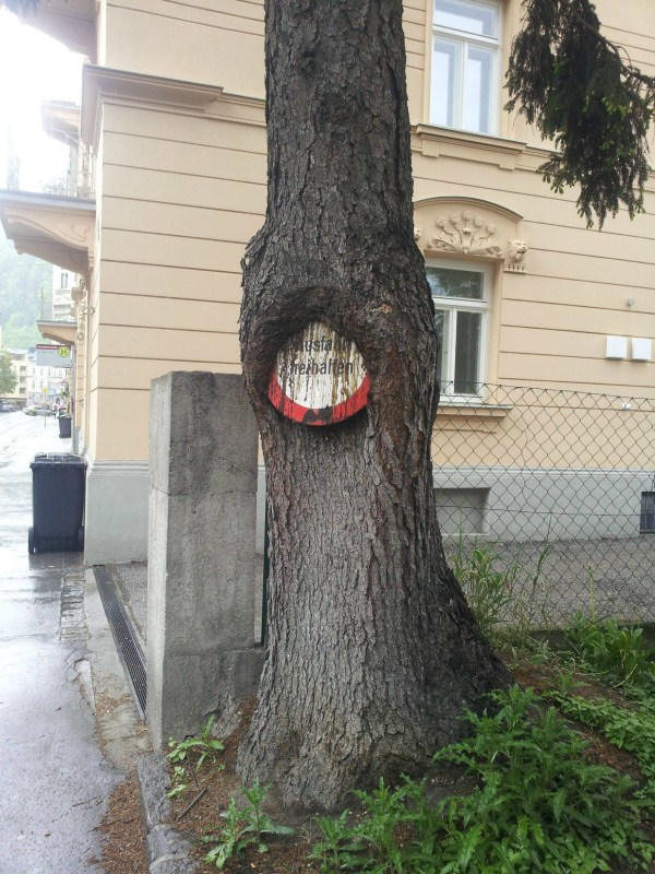 things eaten by trees (19)