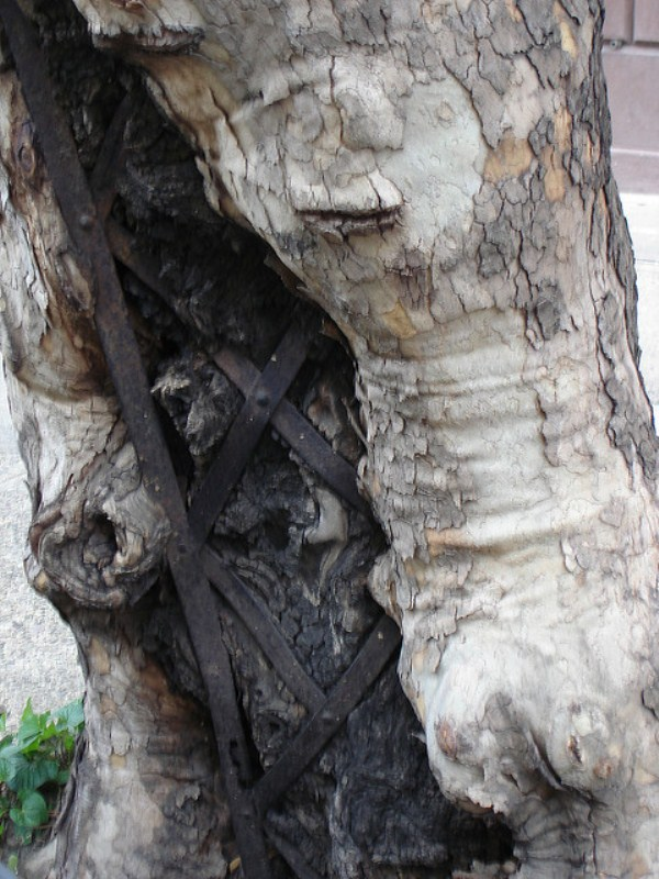 things eaten by trees (2)