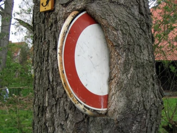 things eaten by trees (32)