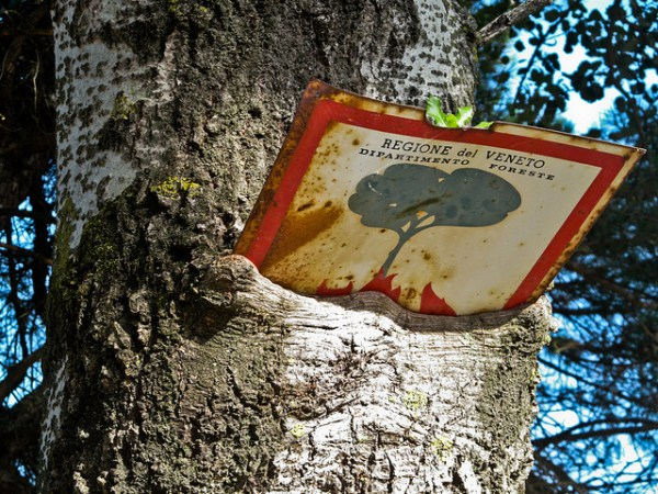 things eaten by trees (9)