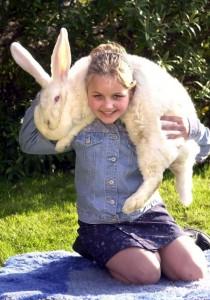 Extremely Big Rabbits (32 photos) 1